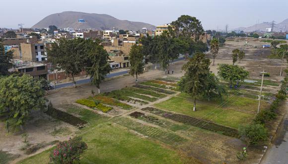 Mediante un convenio con el Servicio de Parques (Serpar), se plantarán especies arbustivas y forestales, como molles y laureles, en un área de 1,200 metros cuadrados. (Foto: Municipalidad de Lima)