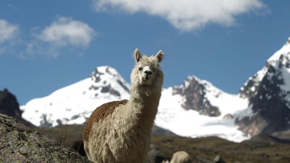 La Caminata Ausangate en Cusco, fue elegida como uno de los mejores 20 lugares para visitar en el año 2020. (Foto: El Comercio)