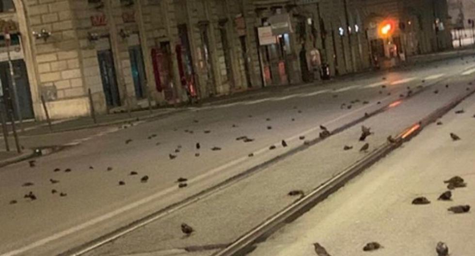 Año Nuevo 2021 | Imagen de las aves muertas en las calles de Roma. (Captura de video / Twitter).