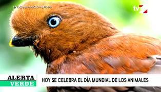 Perú uno de los países con mayor diversidad celebra el día Mundial de los Animales