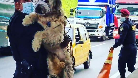 Policías se ganaron el aplauso de los conductores y vecinos por noble gesto de salvar al amigo de cuatro patas.