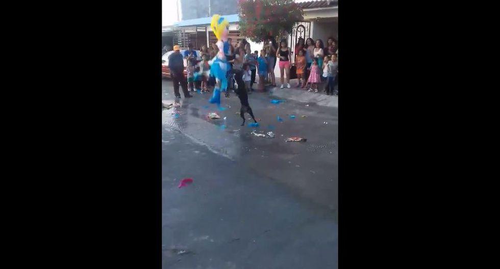 Todo marchaba con tranquilidad en un cumpleaños en México hasta que llegó la hora de romper la piñata. Este perro de raza pitbull se volvió viral en un video de Facebook. (Foto: Captura)