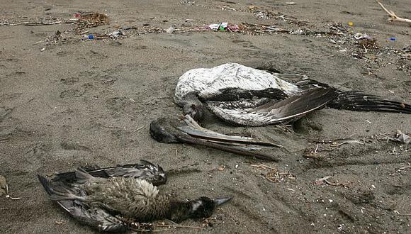 Piden no acudir a playas donde hallaron aves muertas. (David Vexelman)