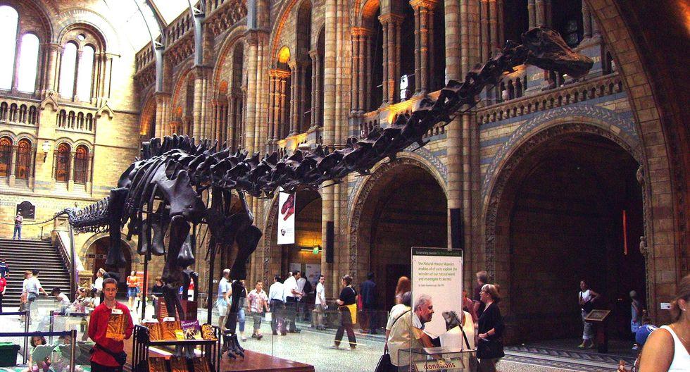 'Andrew': El fósil de Diplodocus que ha despertado nuevas dudas sobre los dinosaurios. (Difusión)