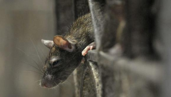 La temporada de caza de estos roedores alcanza su punto máximo entre junio y julio. (Reuters)
