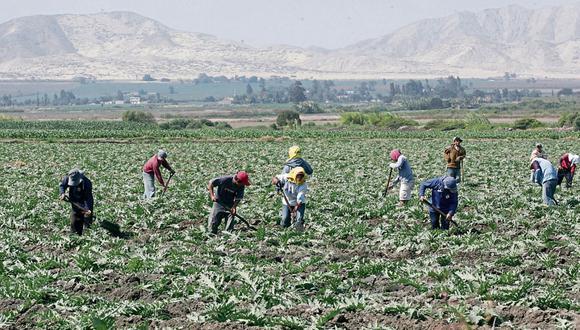 Se busca la capacitación de productores, así como la tecnificación e industrialización del agro nacional, sostuvo Midagri. (Foto: GEC)