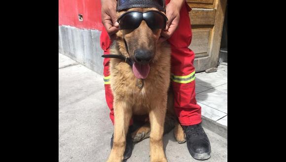 Bomberos piden ayuda para salvar la vida de su perro rescatista (Tributo al Bombero del Perú)
