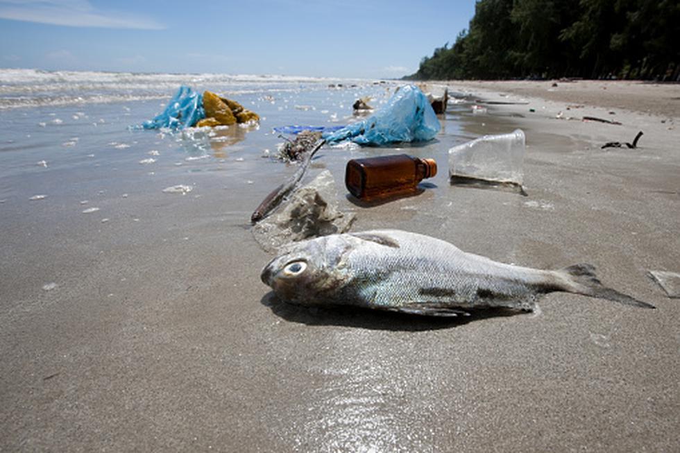 Para el 2050 habrá más plástico que peces ¿Qué podemos hacer? (GETTY)