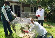 Rescatan a 13 aves de la fauna silvestre que se encontraban encerrados en una jaula en Piura