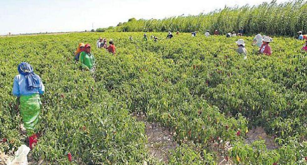 Bonos beneficiaron a 12,340 pequeños productores agropecuarios. (USI)