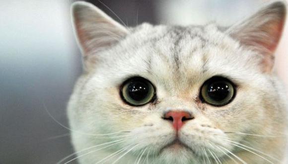 Japón: Mujer murió por contagiarse de un virus letal proveniente de un gato (AFP)
