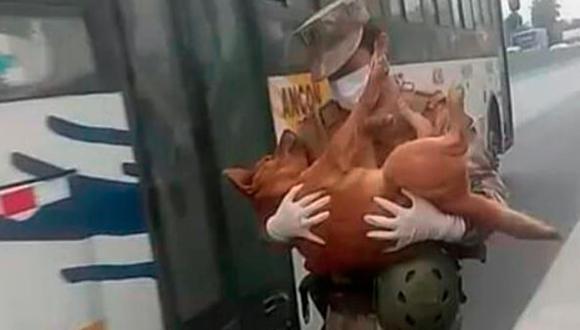 . El teniente Aranda lleva en brazos al perro que fue atropellado. El vagabundo animal solía deambular en la zona donde el militar estaba destacado.