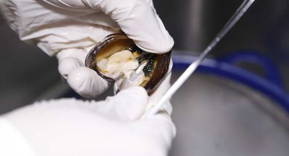 Restricción en la extracción de moluscos bivalvos es en el área de la isla San Lorenzo. (Foto: Andina)