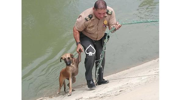 Policía rescata a perro en Piura. (Foto: Joe Miñán Ballesteros)
