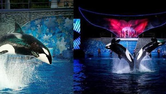 Una de las orcas atacó a uno de sus entrenadores en febrero de 2010. (ABC.es)