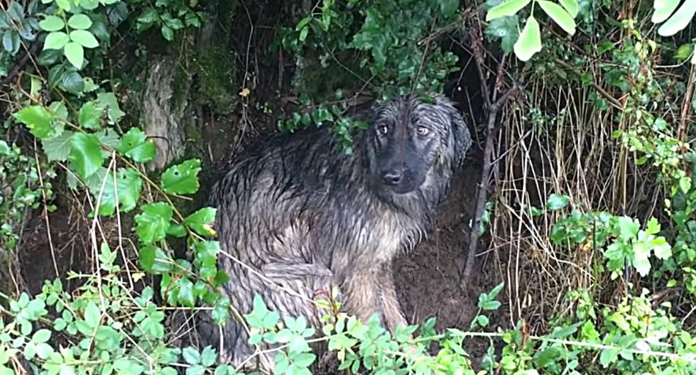 Los rescatistas asumen que el can, que fue encontrado durante un día lluvioso, estaba esperando a que llegara su dueño. (Foto: Captura)