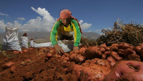 El país produce 4 millones de toneladas de papa por año. (Giancarlo Shibayama)