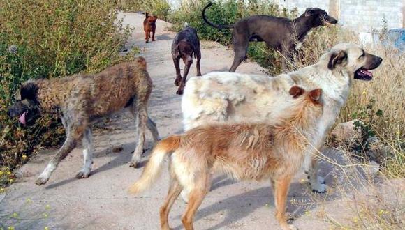 Las acusaciones salieron a la luz cuando un voluntario de la ONG denunció ante los medios que Park había sacrificado a muchos animales sin consentimiento del resto del personal de Care. (Foto referencial: EFE)
