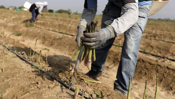 El sector agropecuario anotó un avance de 0.8% en febrero. (Foto: GEC)