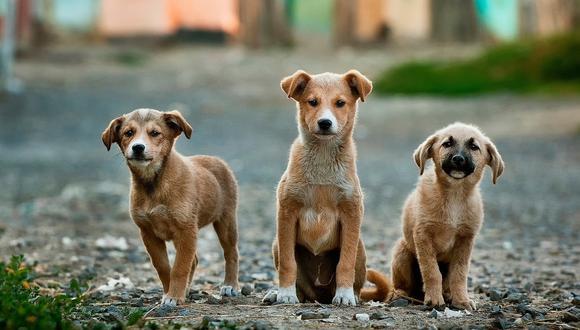 Todos aquellos que poseen un perro desde cachorro deben de poner límites y no caer en el excesivo engreimiento: