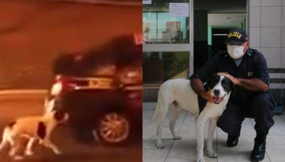 PNP aclara que perro que subió a patrulla pertenece al equipo canino que apoya durante toque de queda. (Foto: Composición)