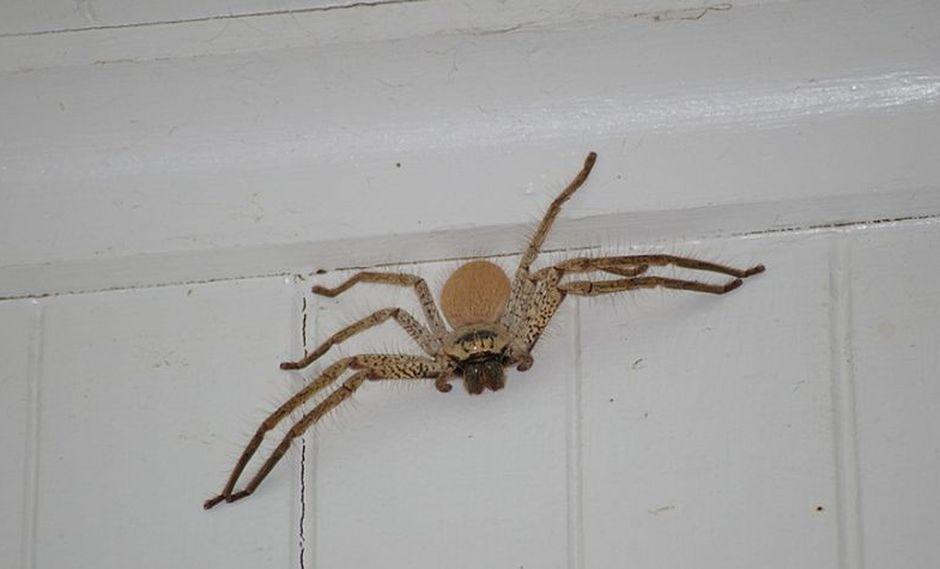 La araña se encontraba en el asiento del copiloto. (Foto: Pixabay)