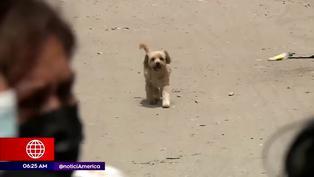 VES: Vecinos denuncian que ladrones envenenan a perros para cometer asaltos