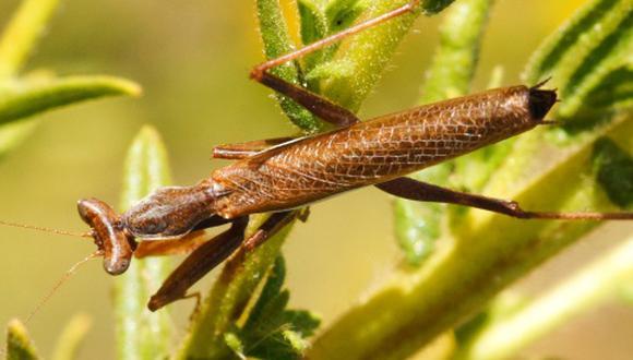 Los insectos están desapareciendo de la Tierra a una velocidad de vértigo. (Getty)
