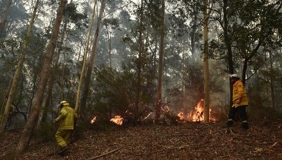 Muchas instituciones públicas y privadas están trabajando para contribuir de alguna manera con lo que está sucediendo en Australia. (Foto: PETER PARKS / AFP)