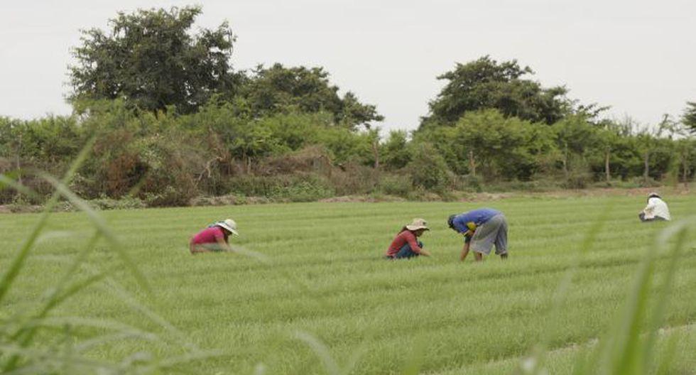 Podría perderse todo lo avanzado en la agroindustria, advierten en Comex Perú. (USI)