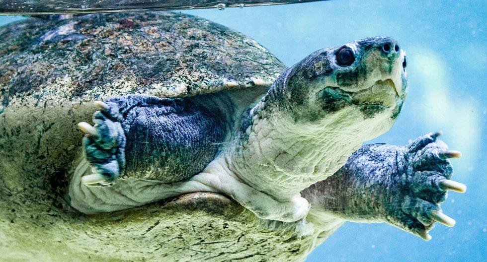 La tortuga pudo volver al mar, felizmente. (Foto: Referencial - Pixabay)