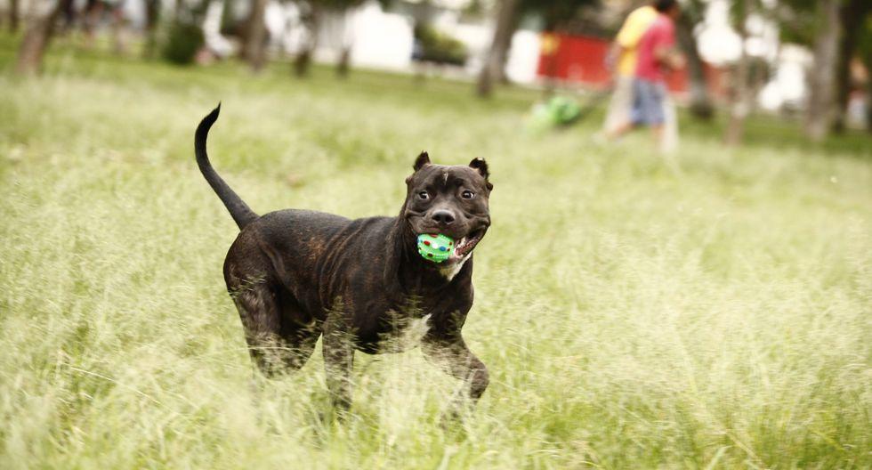 """La Municipalidad de Surquillo junto a la asociación """"Fundación Rayito"""" realizarán este domingo 27 de enero una campaña veterinaria gratuita. (Foto: El Comercio)"""