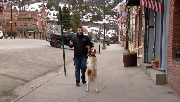 El perro que aprendió a andar como un humano tras sufrir un atropello. (Foto: 9NEWS / YouTube)