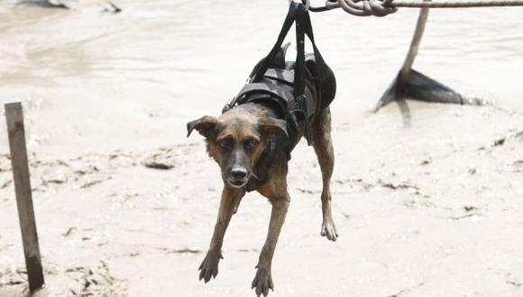 Ministerio pide ayuda para ayudar a los perrros y gatos afectados por los huaicos. (@minagriperu)