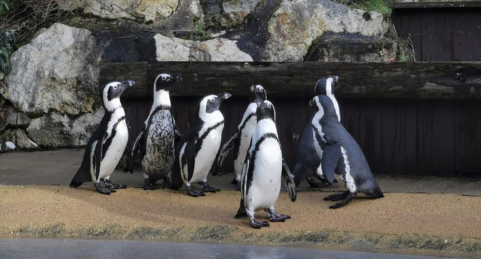 Más de 20.000 personas se unen para comprar un zoológico y liberar a sus animales. La historia es viral en Facebook. (Rewild)