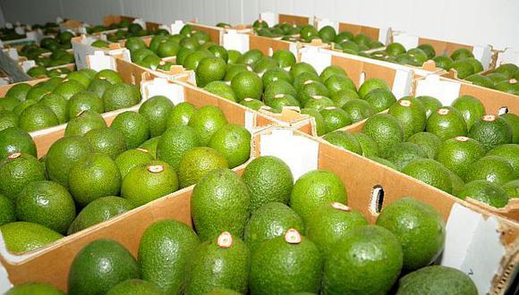 Las exportaciones de Palta de Colombia pasaron de US$4 millones a US$62 millones entre 2014 y 2018. (Foto: GEC)<br>