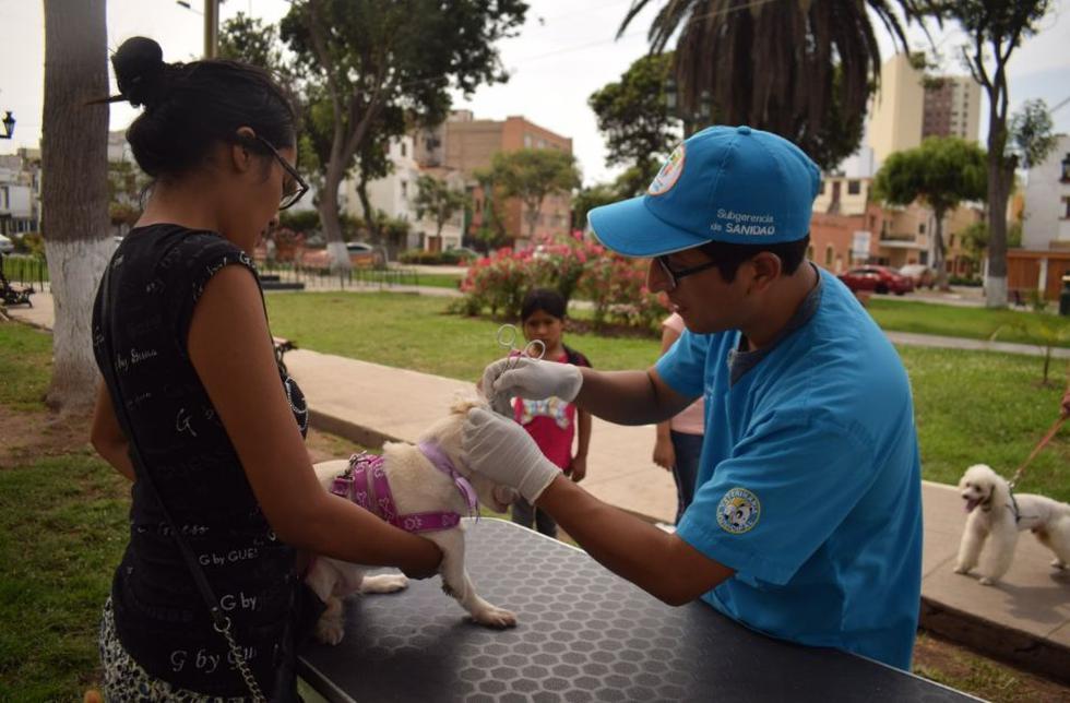 """Municipalidad de Jesús María inició la """"Campaña Médica Veterinaria 2019. (Foto: Municipalidad de Jesús María)"""