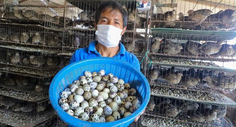 Los avicultores recibirán apoyo del Gobierno. (Foto: Produce)