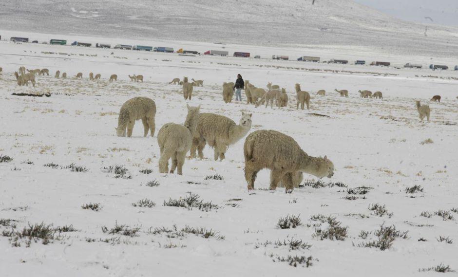 Para la protección del ganado se destinarán S/ 82 millones. (Foto: GEC)