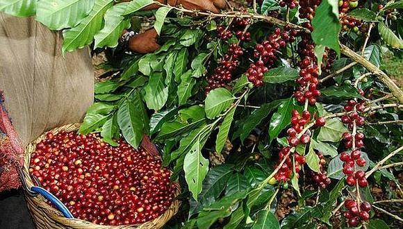 El café premium de Junín cumple con los sellos de certificación más exigentes internacionalmente.