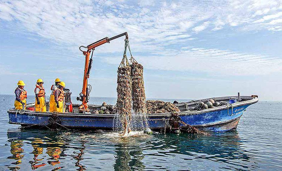 Sanipes dispuso cierre del área de producción de moluscos en el Callao. (Foto: Sanipes)