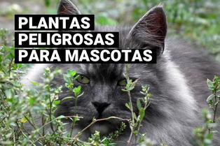 Estas plantas domésticas pueden ser peligrosas para tus mascotas