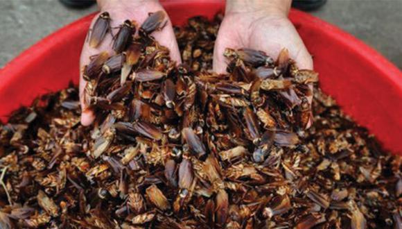 ¿Por qué casi siempre que encuentras una cucaracha muerta patas para arriba en tu casa? (Cucarachapedia)