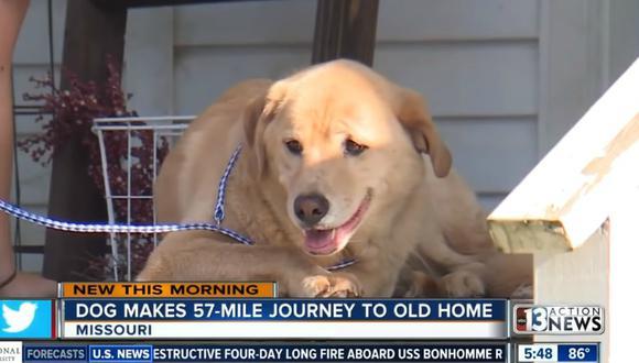 Nadie puede explicar cómo hizo el perro para movilizarse una distancia de 90 kilómetros, en donde hay varias carreteras, un puente y un río. (Foto: Captura/KTNV Channel 13 Las Vegas)