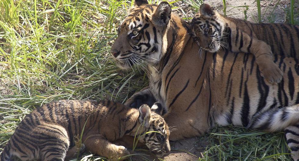 La ordenanza no afecta al zoológico de Los Ángeles, que aún puede exhibir animales salvajes con fines educativos. (AFP).