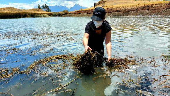 Ancashinos se unieron para limpiar la turística laguna Willcacocha (Foto: Dircetur - Áncash)