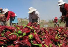 Empresas agrícolas están obligadas a cumplir estándares de protección y prevención