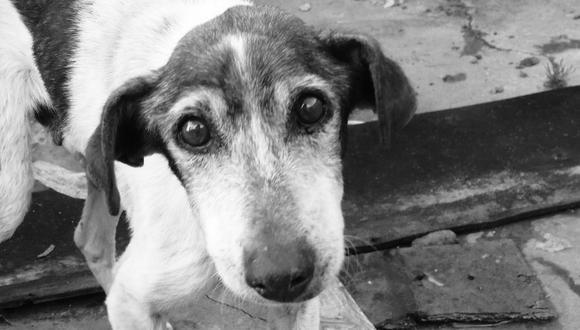 Un perro disfrutó por última vez del lugar que solía recorrer junto a su dueño antes de perder su lucha de varios meses contra la leucemia. | Crédito: Pixabay / Pexels / Referencial