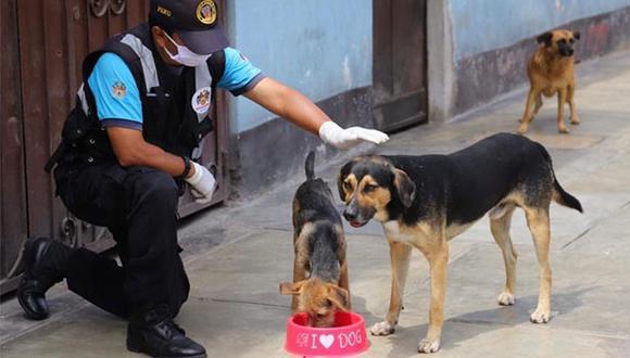 El pasado 30 de junio el pleno del Congreso aprobó la ley que establece la esterilización de perros y gatos como una política de salud pública. (Foto: Municipalidad de Magdalena)