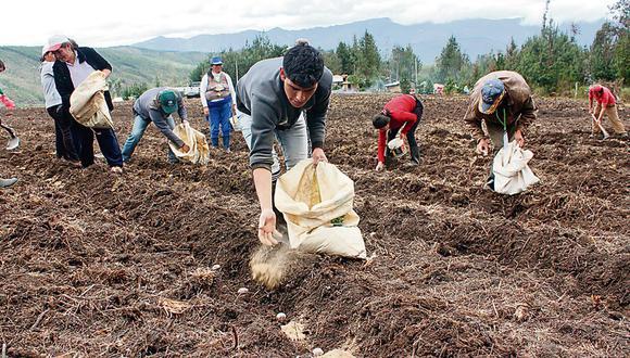 Apurímac: la distribución del guano de las islas se efectuará mediante los tres puntos de venta ubicados en Abancay, Andahuaylas, Chincheros